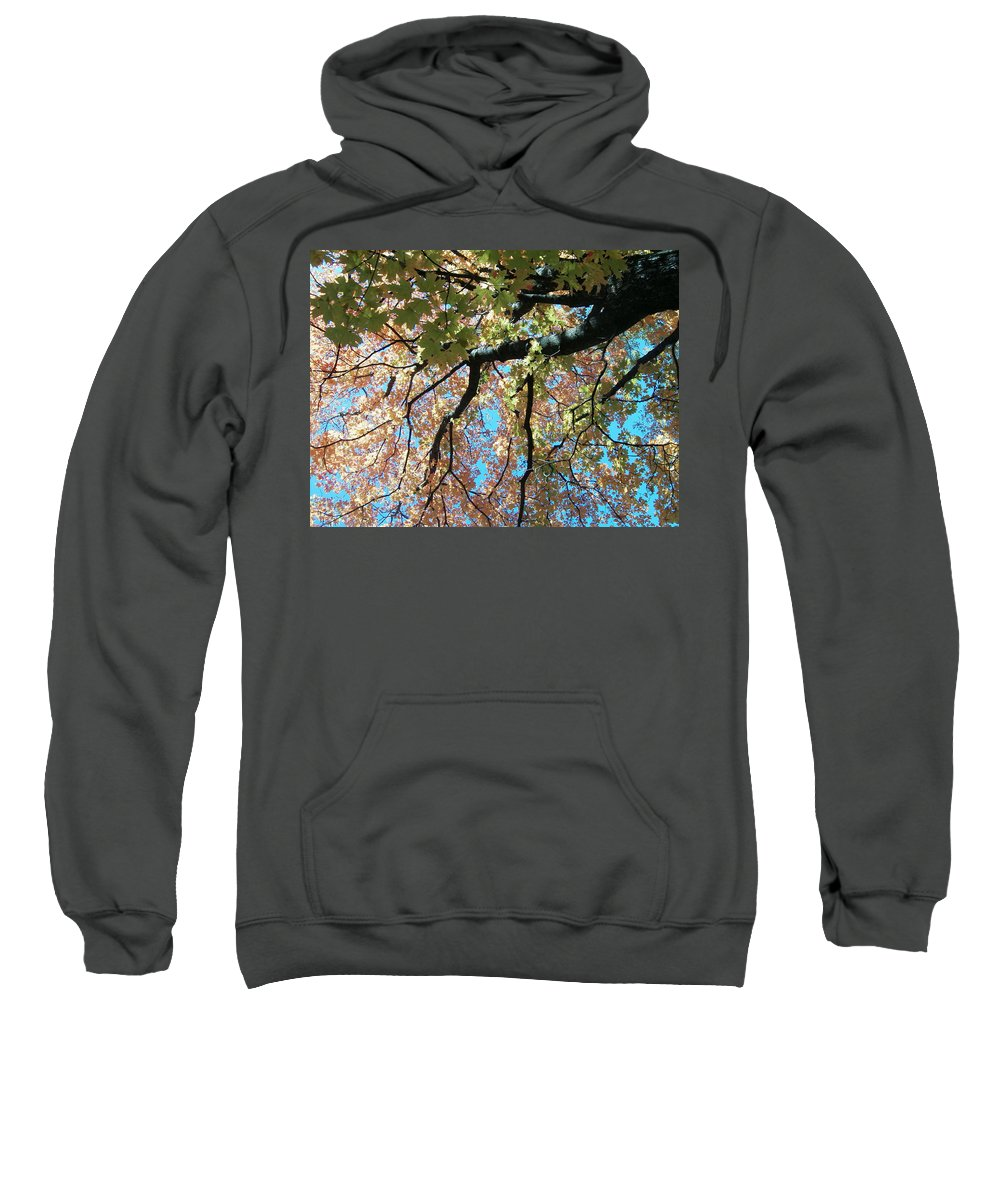 Trees Turning Fall Colors Sweatshirt featuring the photograph Falls Coming by Karen Capehart