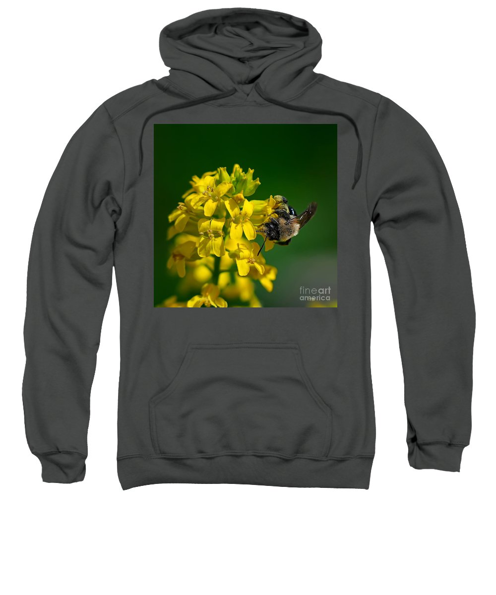 Bee Sweatshirt featuring the photograph Fanfare For The Common Bumblebee by Lois Bryan