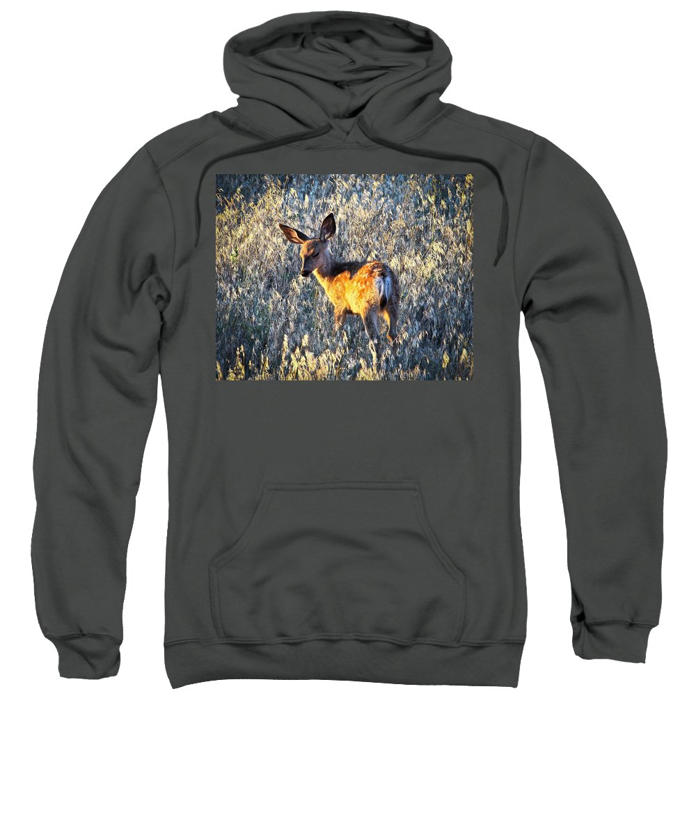 Mule Deer Fawn Sweatshirt featuring the photograph Fawn by Steve McKinzie