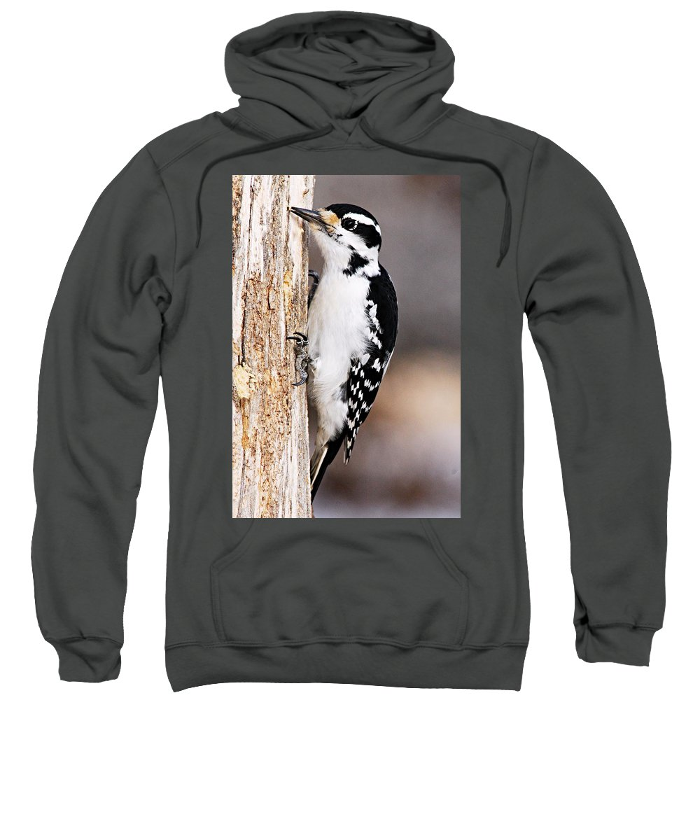Photography Sweatshirt featuring the photograph Female Hairy Woodpecker by Larry Ricker