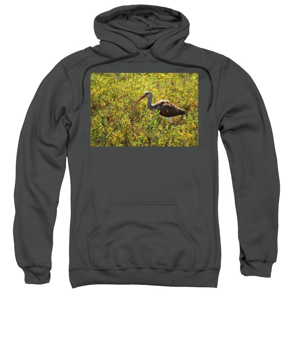 Roena King Sweatshirt featuring the photograph First Year White Ibis by Roena King