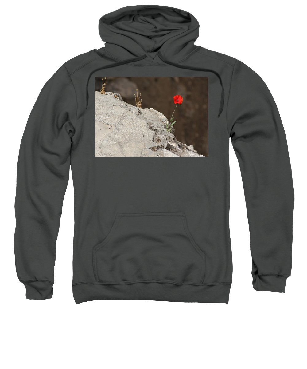 Flower Sweatshirt featuring the photograph Flower By The Pool Of Bethesda - Israel by Jennifer Kathleen Phillips