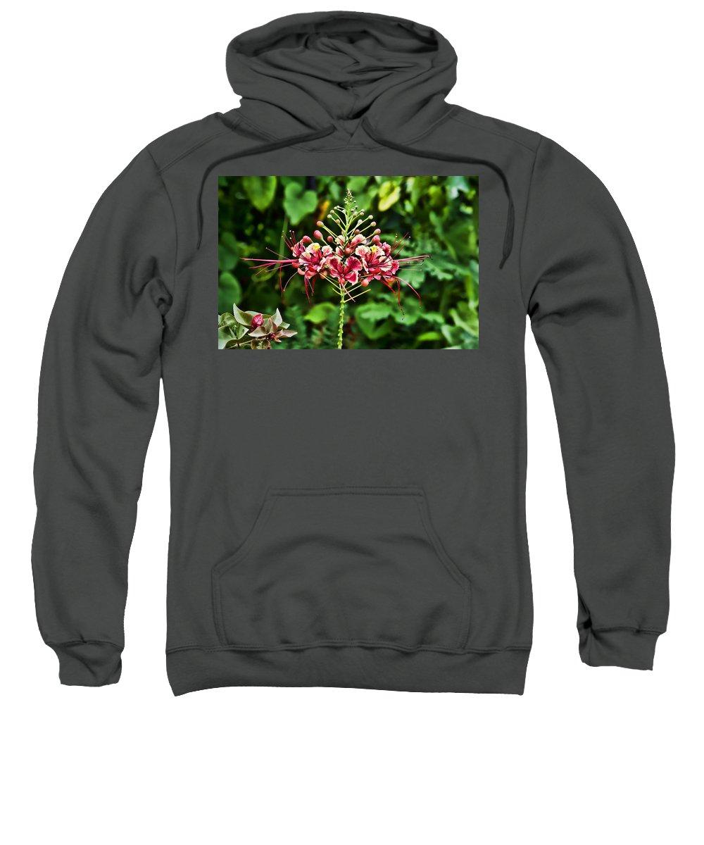 Jamaica Sweatshirt featuring the photograph Flower Fireworks by Sheri Bartoszek