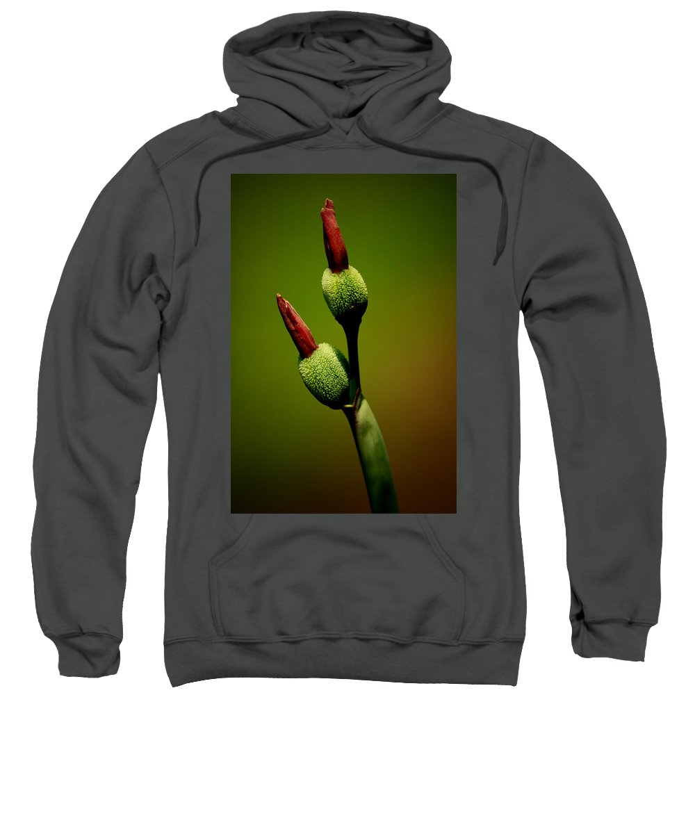 Flower Sweatshirt featuring the photograph Flowerbuds by David Weeks