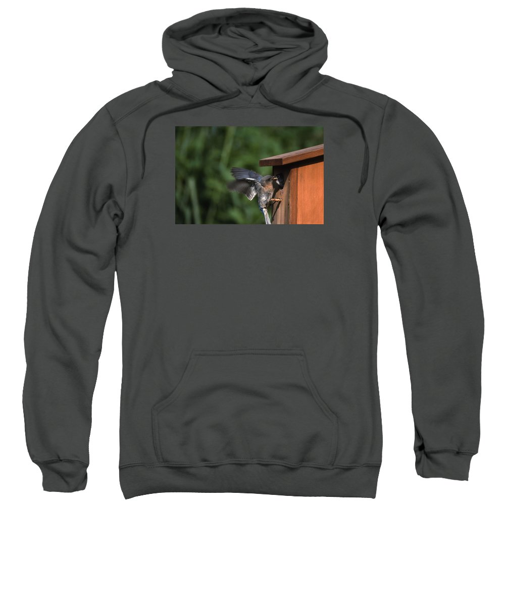 Blue Bird Sweatshirt featuring the photograph Fly Through by Skip Willits