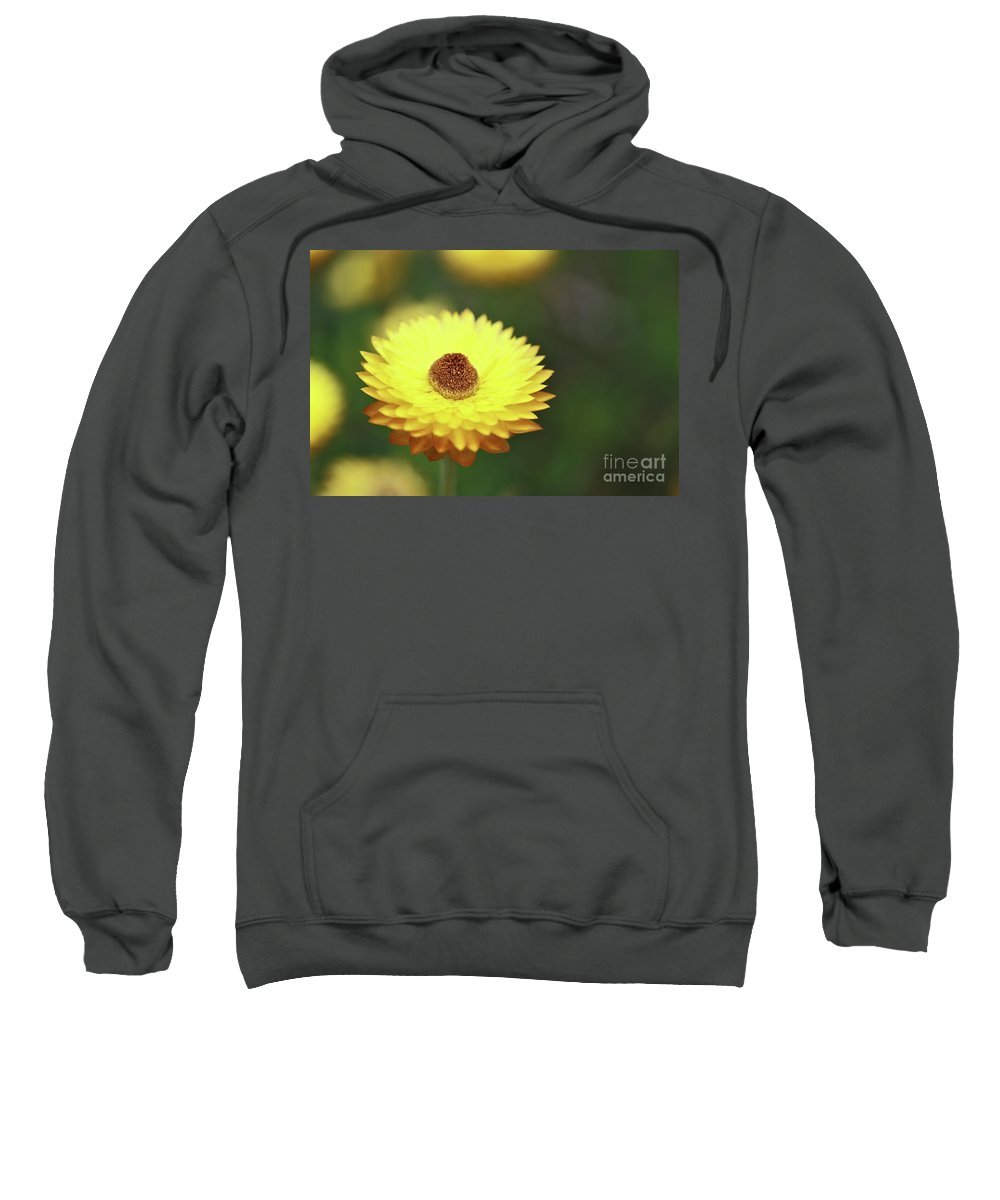 Flower Sweatshirt featuring the photograph Focal Point by Stephen Mitchell