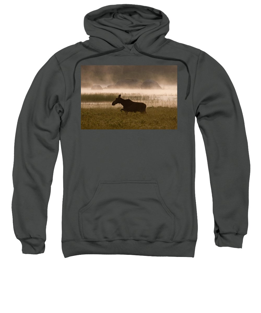 Moose Sweatshirt featuring the photograph Foggy Stroll by Brent L Ander