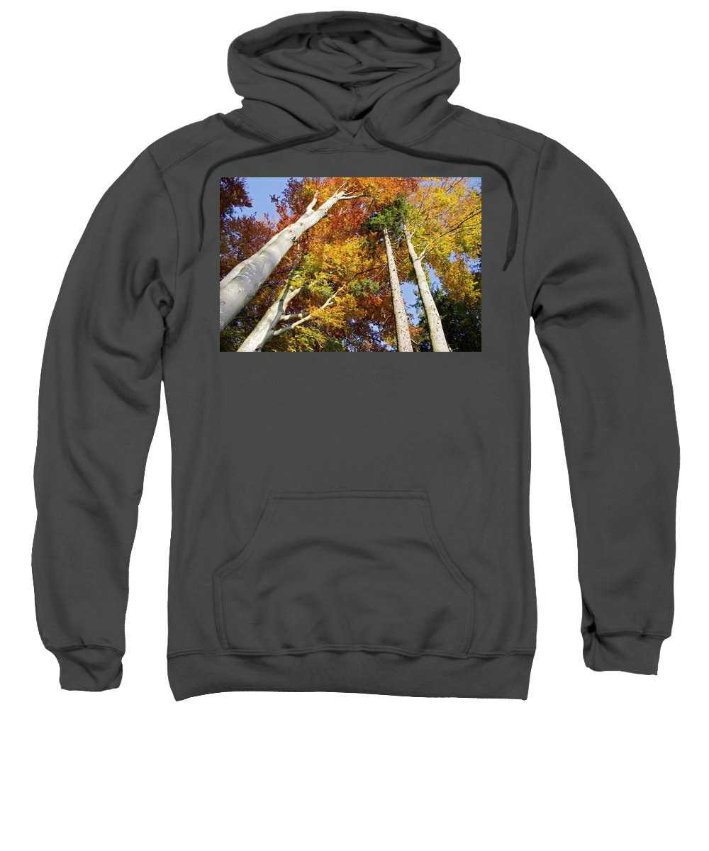 Autumn Sweatshirt featuring the photograph Forest In Autumn Bavaria Germany by Konrad Wothe