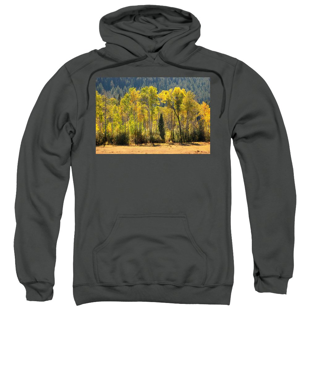 Tetons Sweatshirt featuring the photograph Forested Light by Eric Tressler
