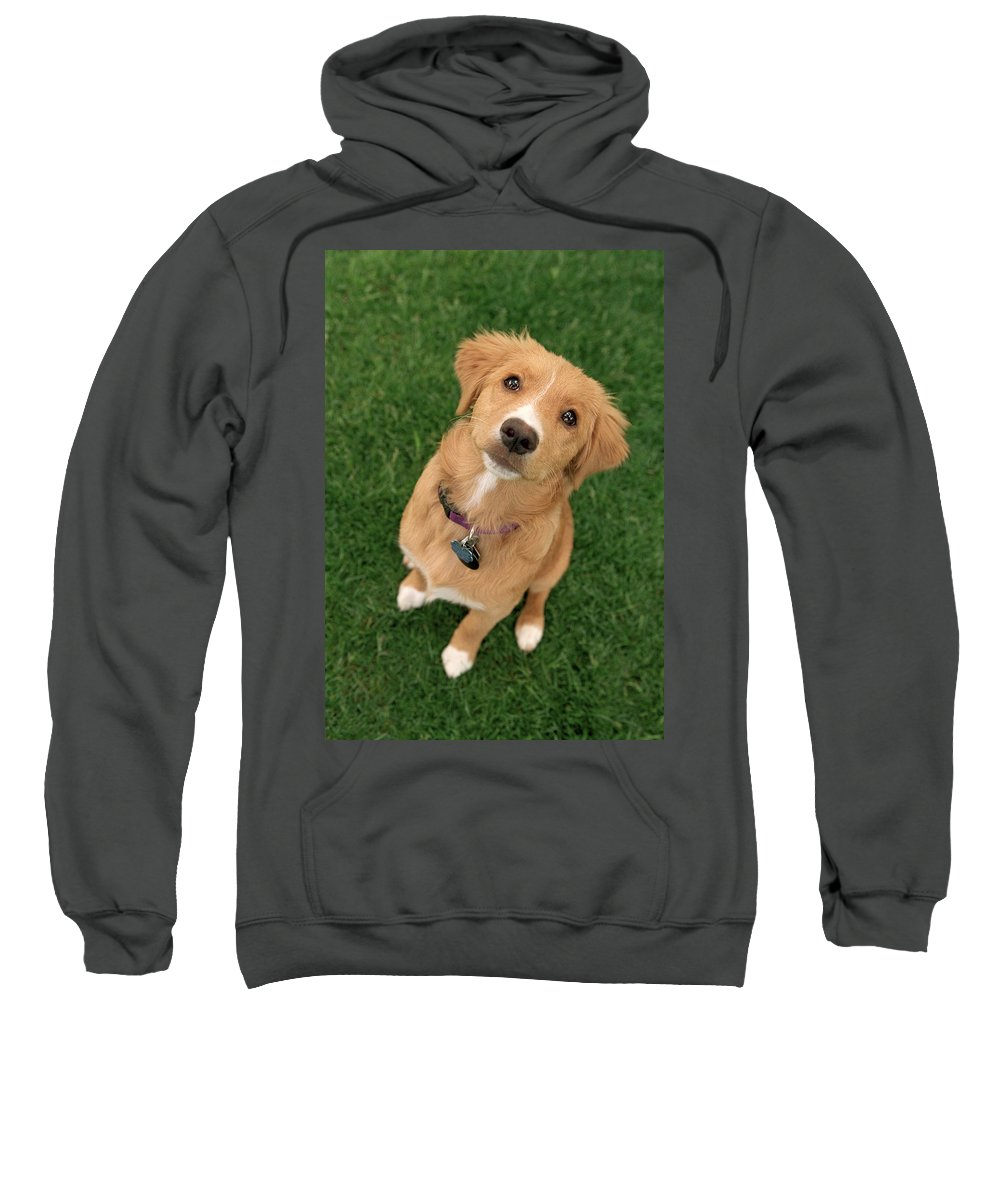 Light Sweatshirt featuring the photograph Friendly Dog by Darwin Wiggett