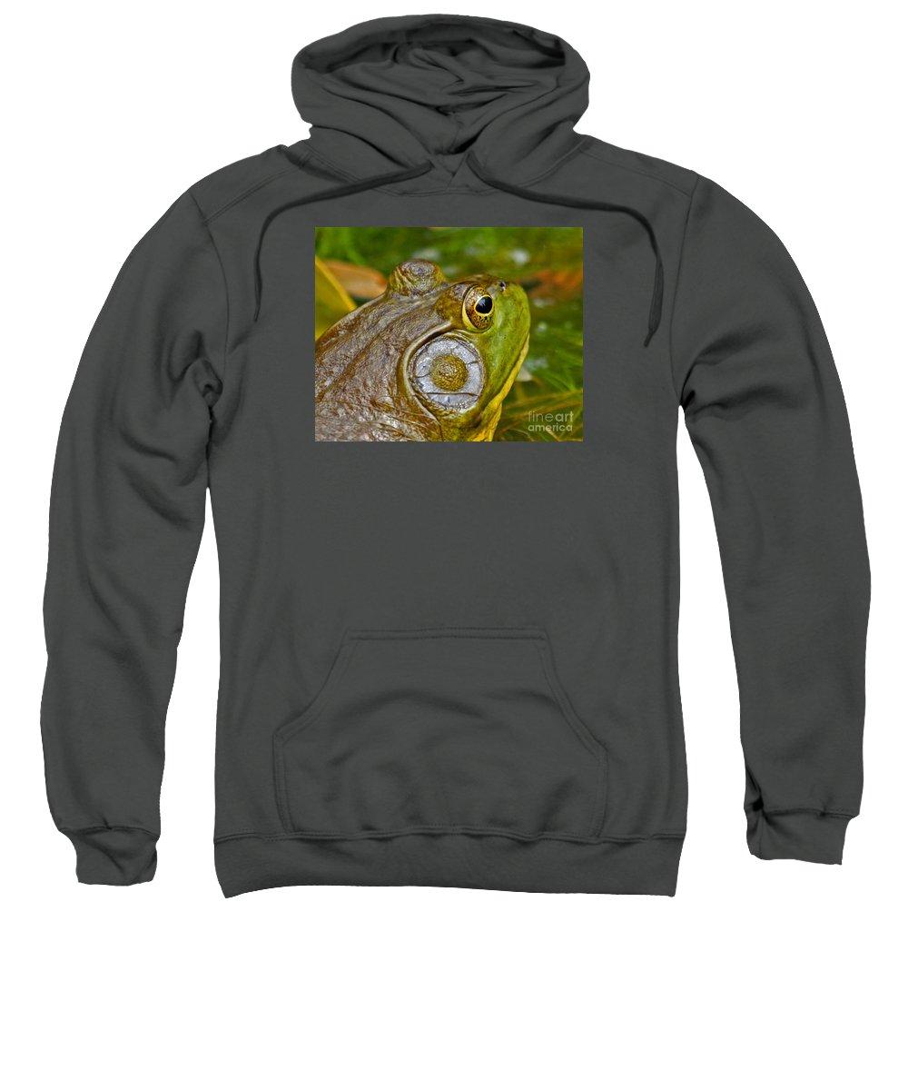 Squirrel Sweatshirt featuring the photograph Frog Eye by Lloyd Alexander