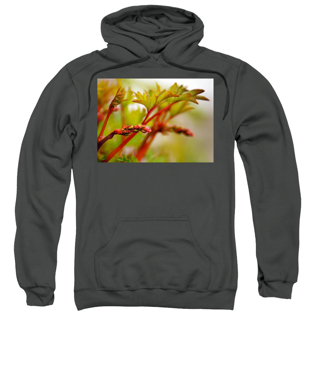 Bleeding Hearts Sweatshirt featuring the photograph Future Bleeding Hearts by Bill Pevlor