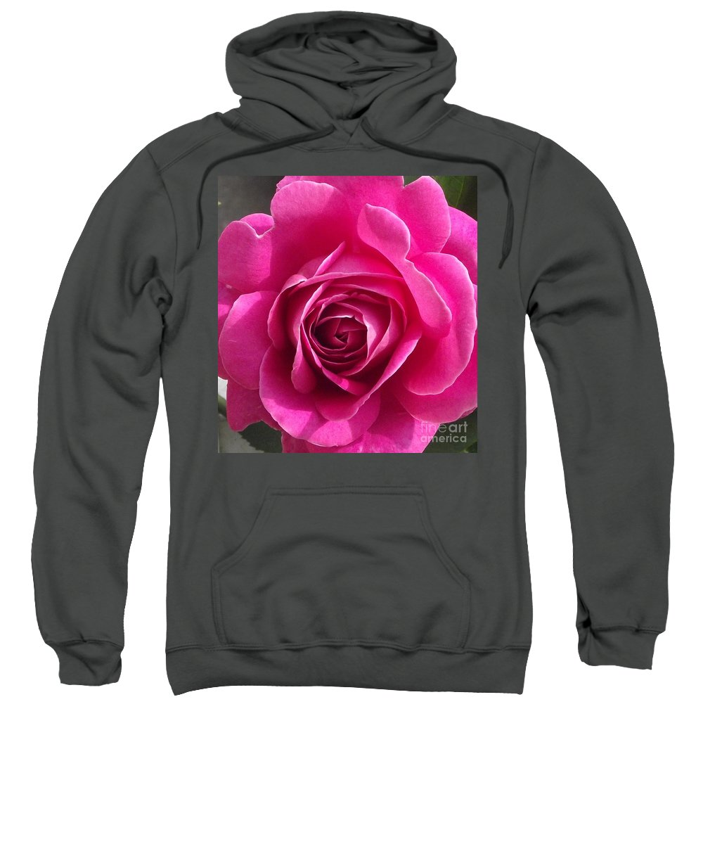 Velvet Pink Rose Petals Sweatshirt featuring the photograph Garden Rose by Michelle Welles