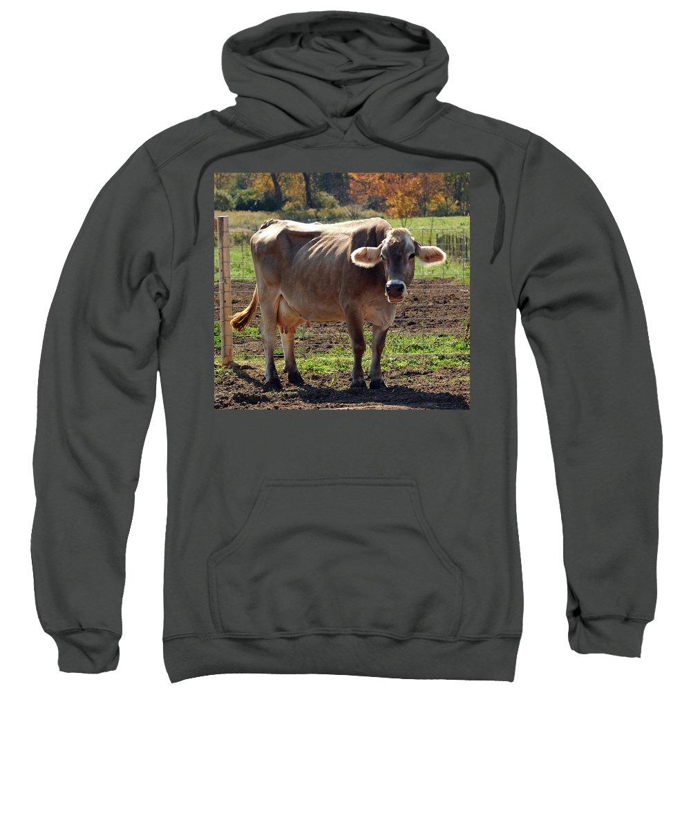 United_states Sweatshirt featuring the photograph Gasping Cow by LeeAnn McLaneGoetz McLaneGoetzStudioLLCcom