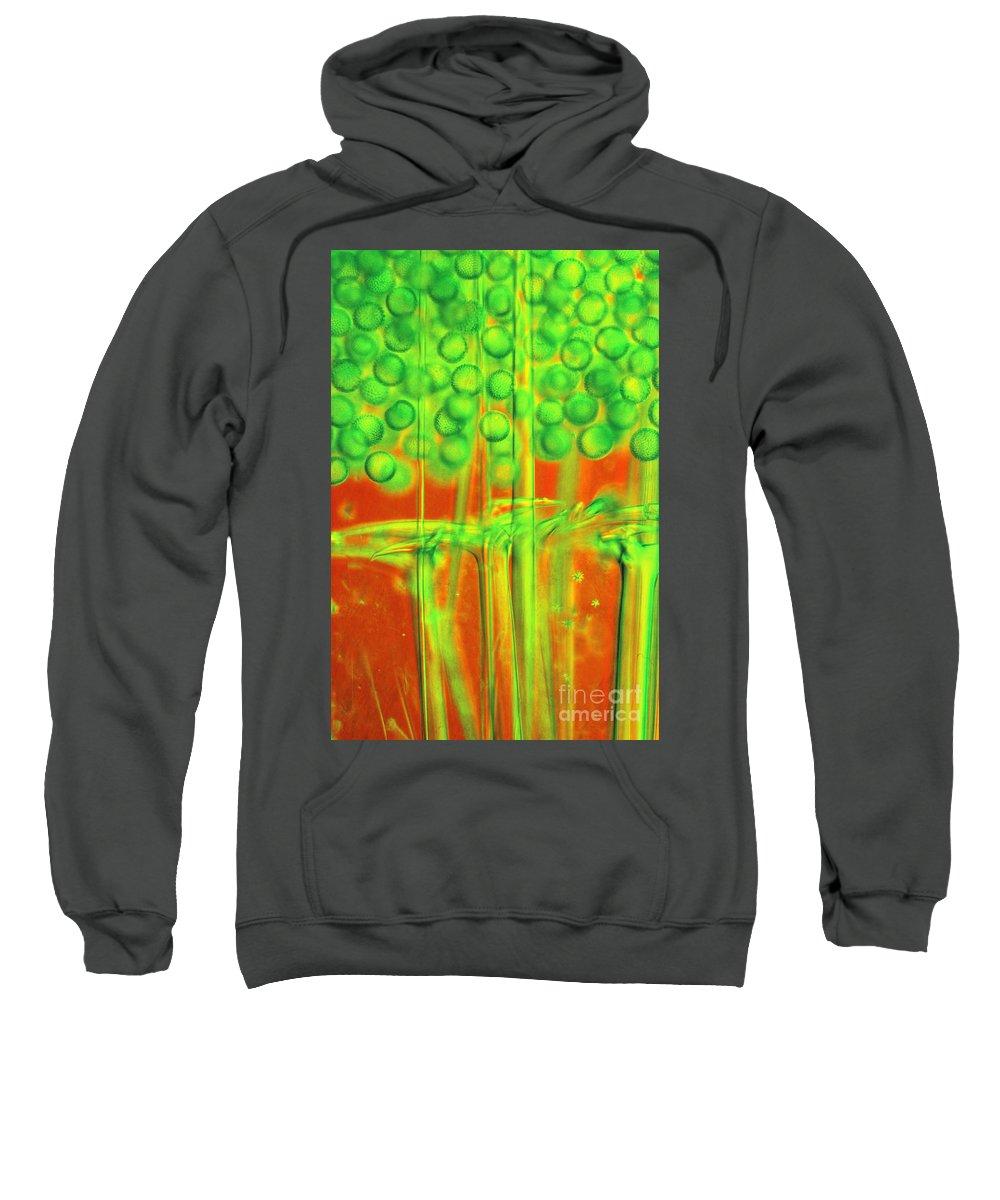 Light Microscopy Sweatshirt featuring the photograph Geodia by M I Walker