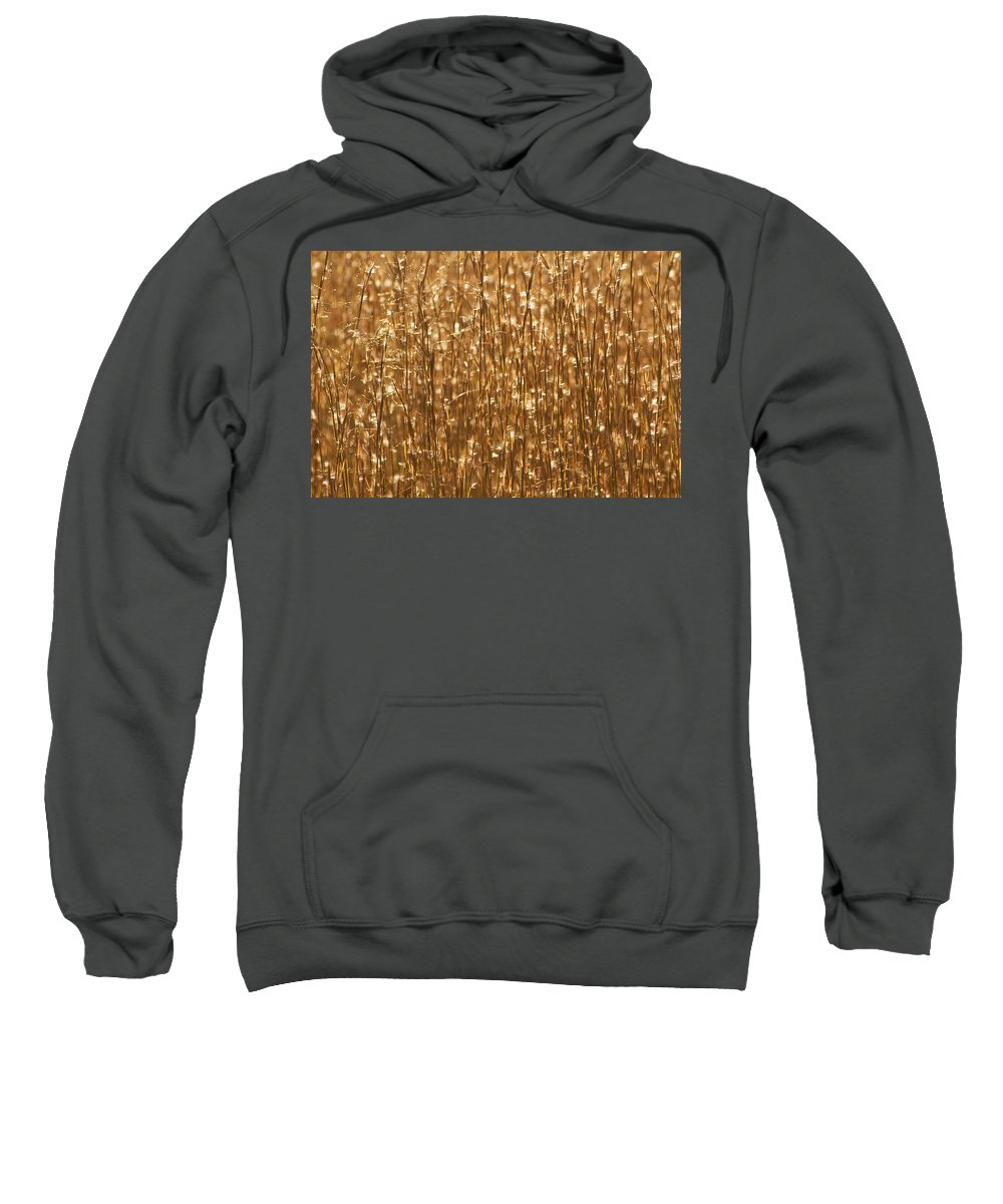 Gold Sweatshirt featuring the photograph Glistening Gold Prairie Grass Abstract by Kathy Clark