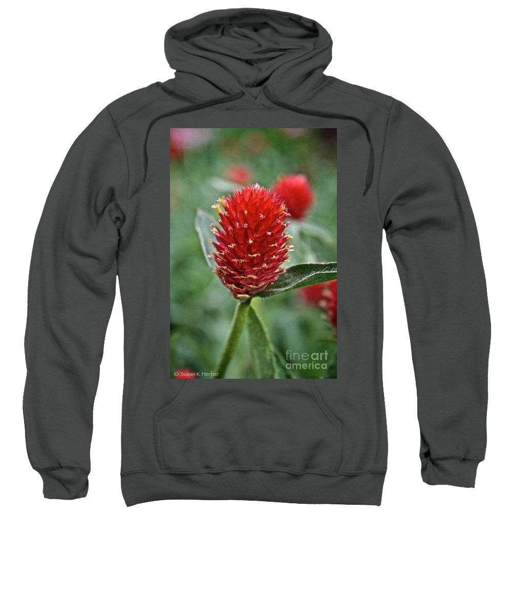 Floral Sweatshirt featuring the photograph Globe Amaranth by Susan Herber