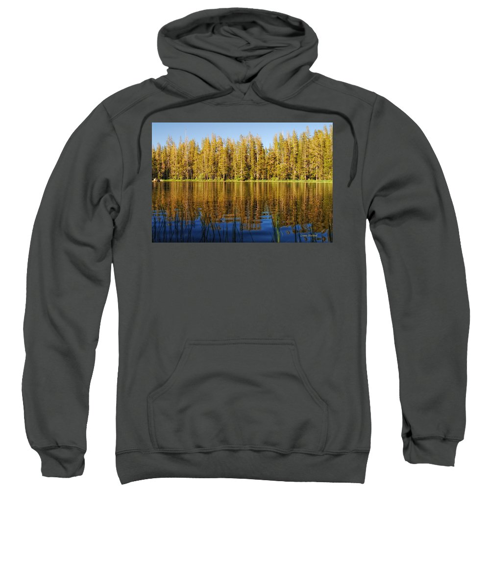Forest Sweatshirt featuring the photograph Golden Days by Donna Blackhall