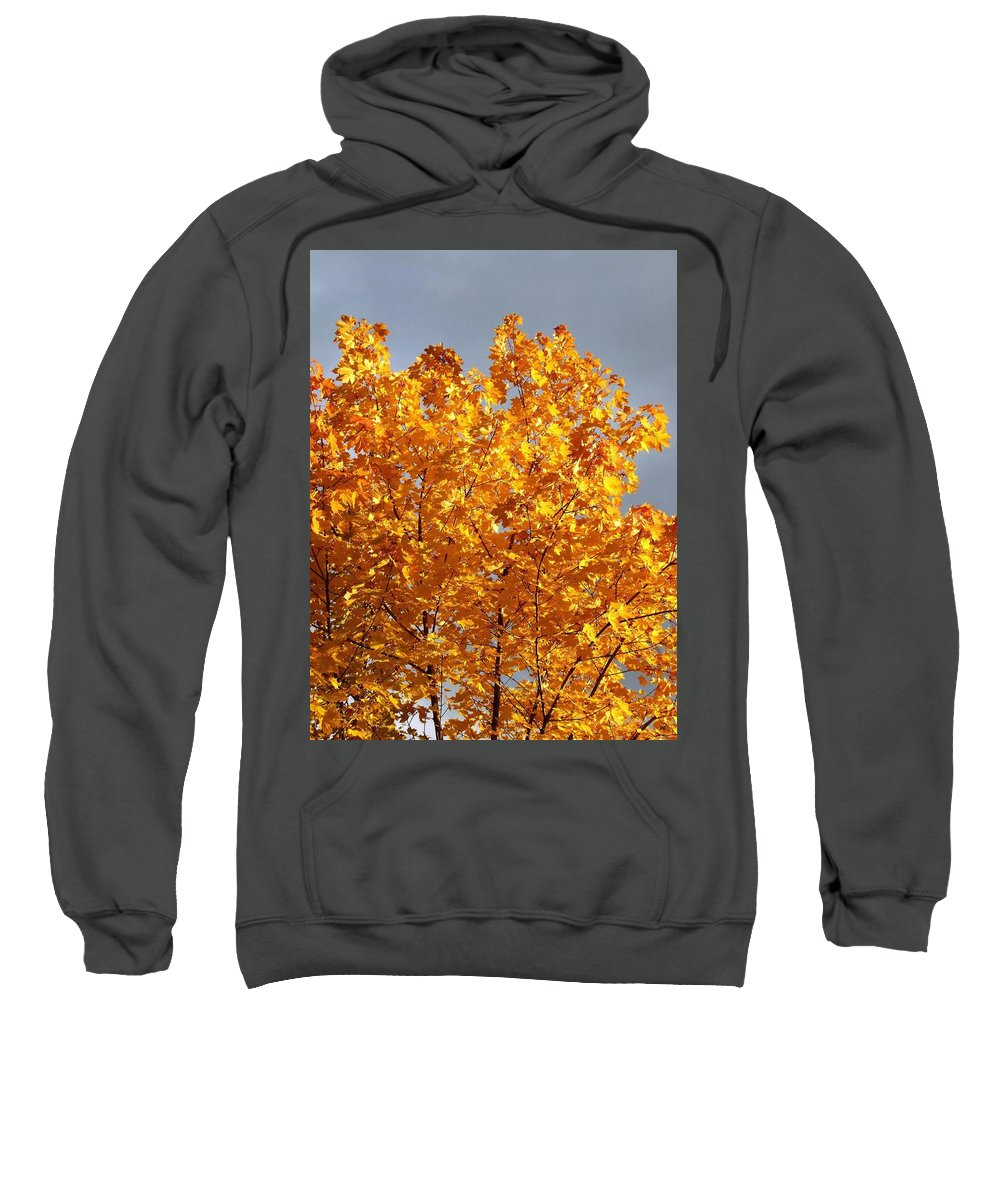 Golden Days Sweatshirt featuring the photograph Golden Days by Will Borden