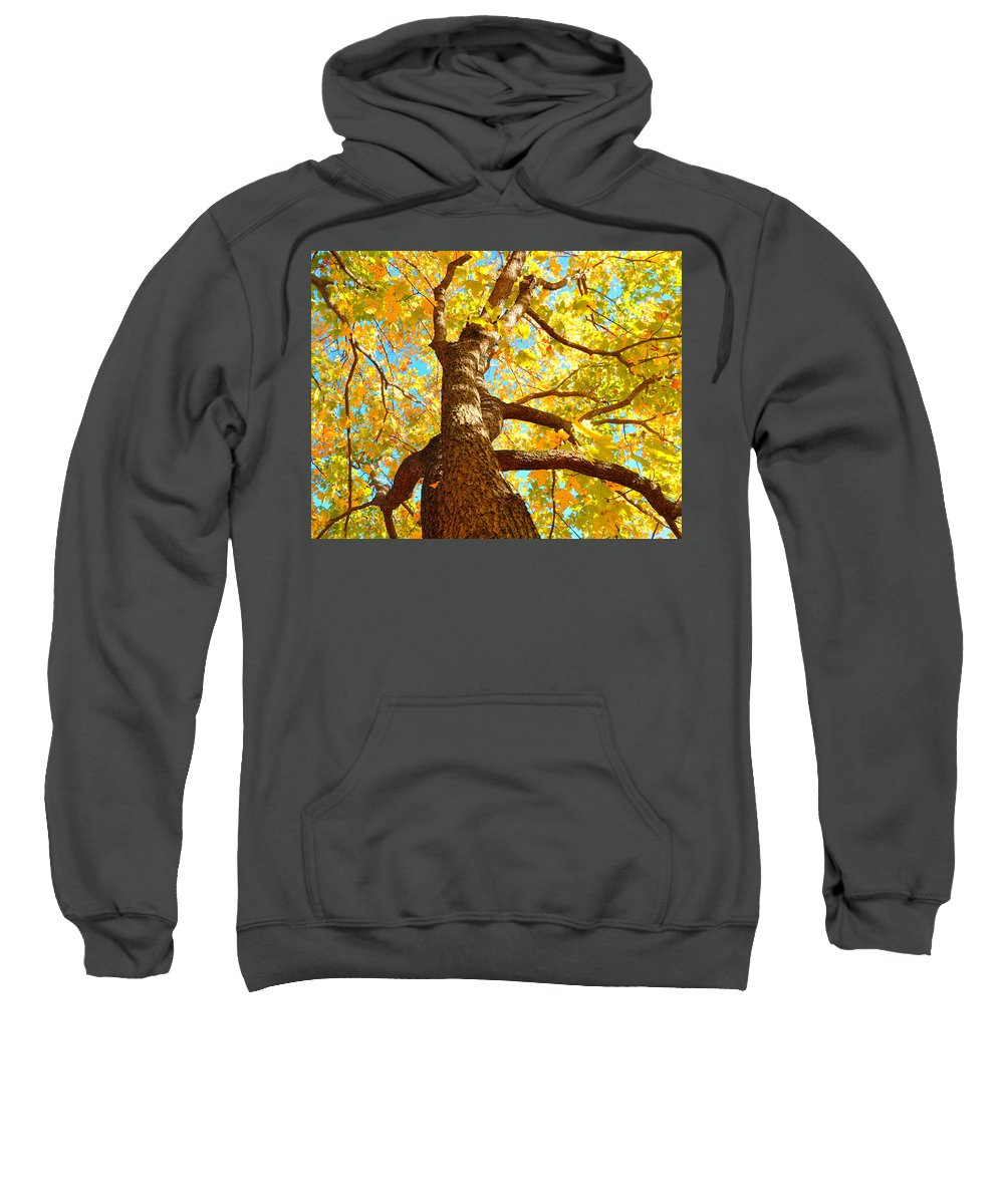 Yellow Leaves Sweatshirt featuring the photograph Golden Green by Brittany Horton