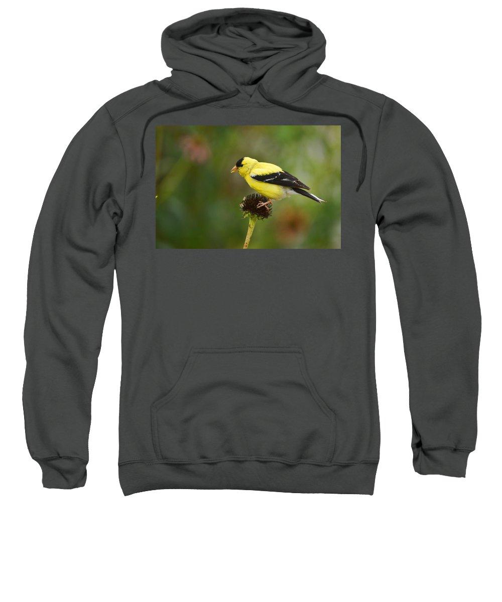Bird Sweatshirt featuring the photograph Goldfinch by Alan Hutchins