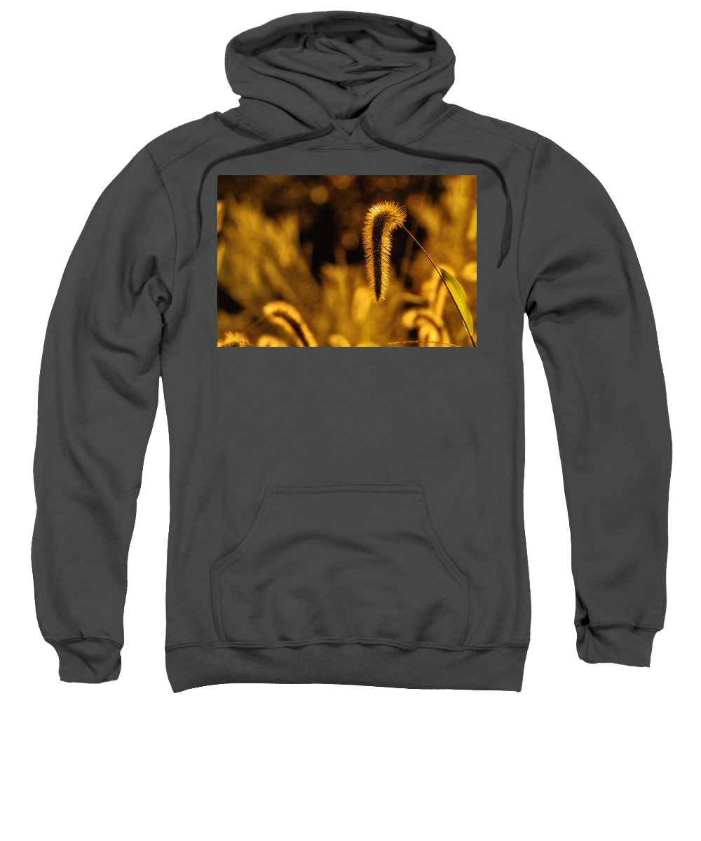 Da 18-135 Wr Sweatshirt featuring the photograph Grass In Golden Light by Lori Coleman