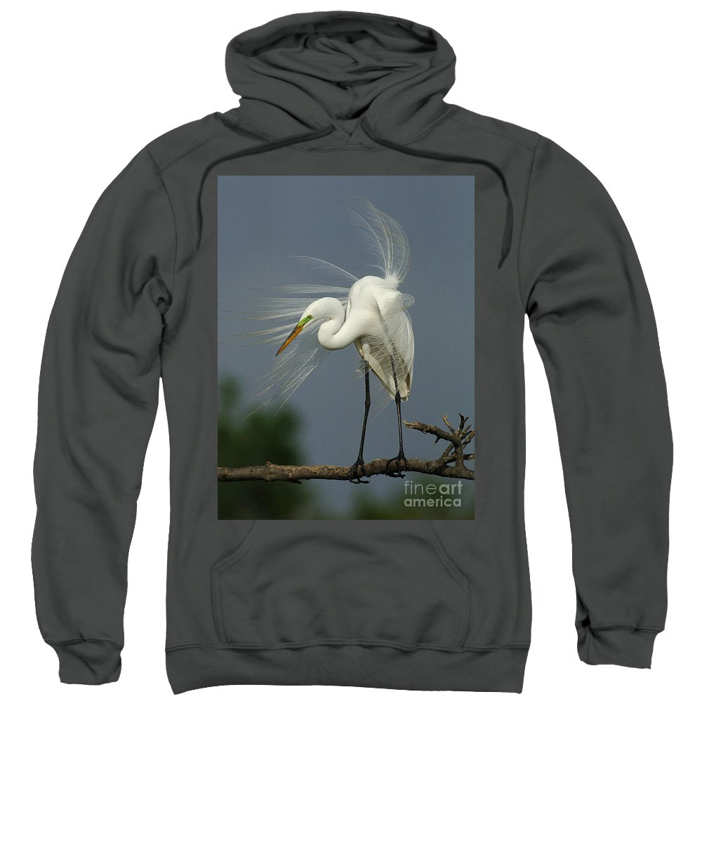 Great Egret Sweatshirt featuring the photograph Great Egret by Bob Christopher
