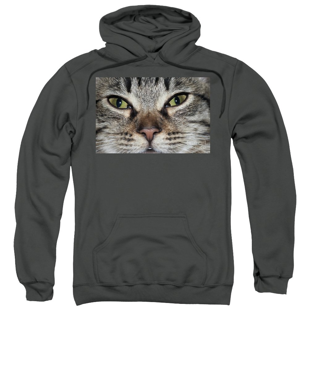 Cat Sweatshirt featuring the photograph Green Eyes by Michal Boubin
