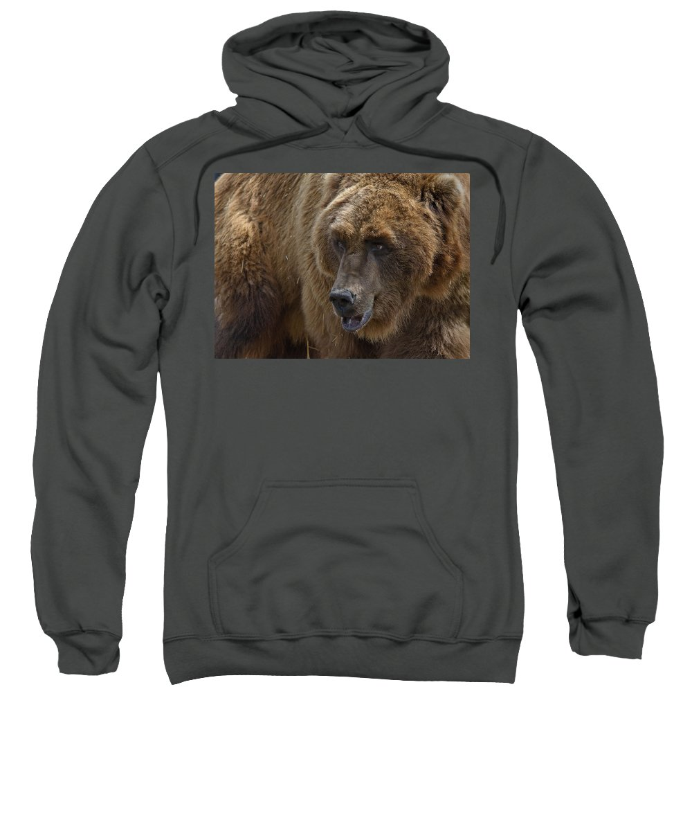 Grizzly Sweatshirt featuring the photograph Griz Portrait by Greg Nyquist