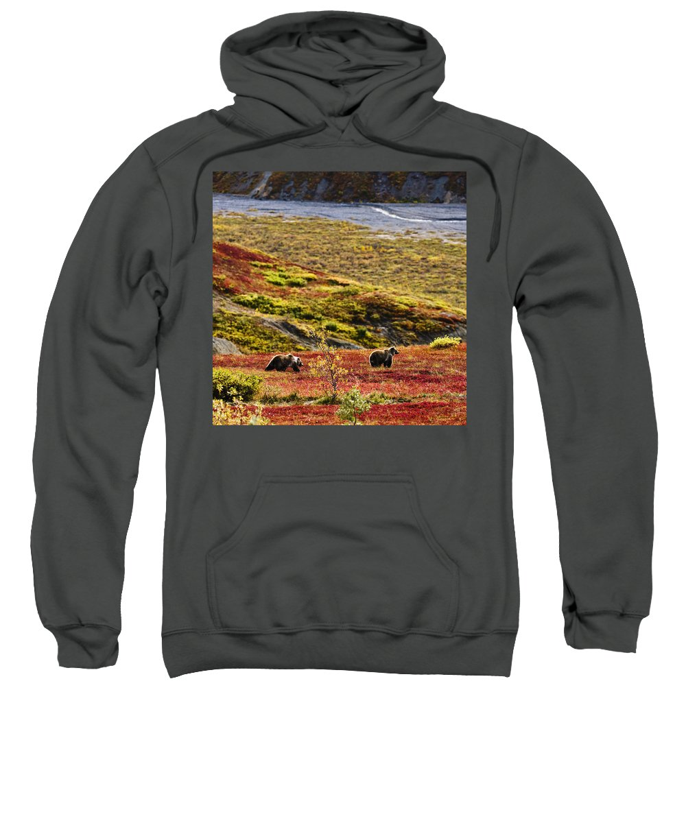 Animals In The Wild Sweatshirt featuring the photograph Grizzly Bears And Fall Colours, Denali by Yves Marcoux