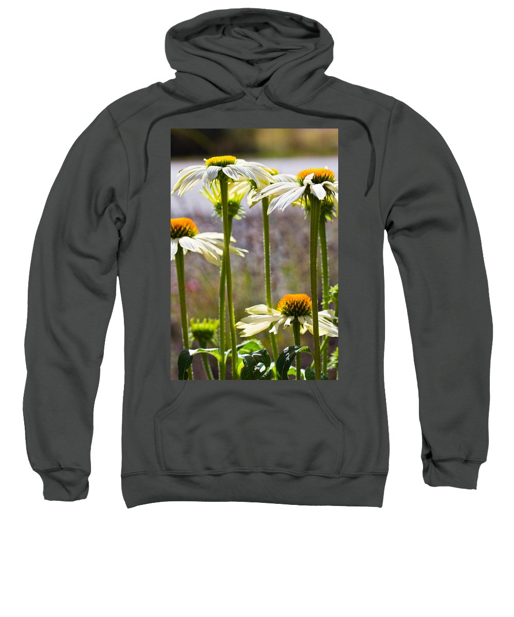 Cone Flowers Sweatshirt featuring the photograph Groupings by Marie Jamieson