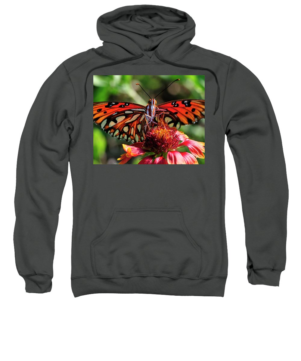 Gulf Fritillary Sweatshirt featuring the photograph Gulf Fritillary Butterfly by Bill Dodsworth