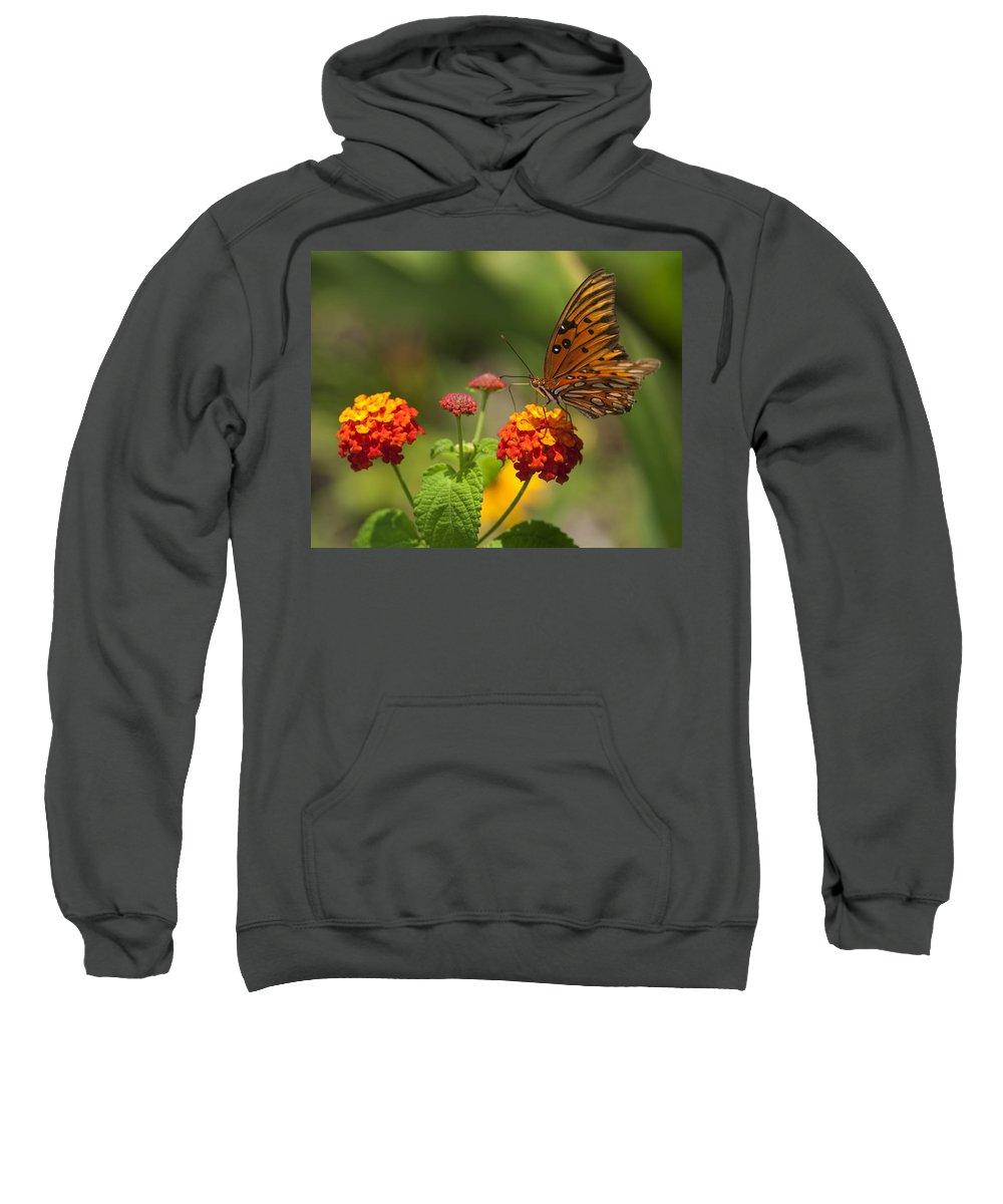 Gulf Fritillary Sweatshirt featuring the photograph Gulf Fritillary Butterfly On Colorful Lantana by Kathy Clark