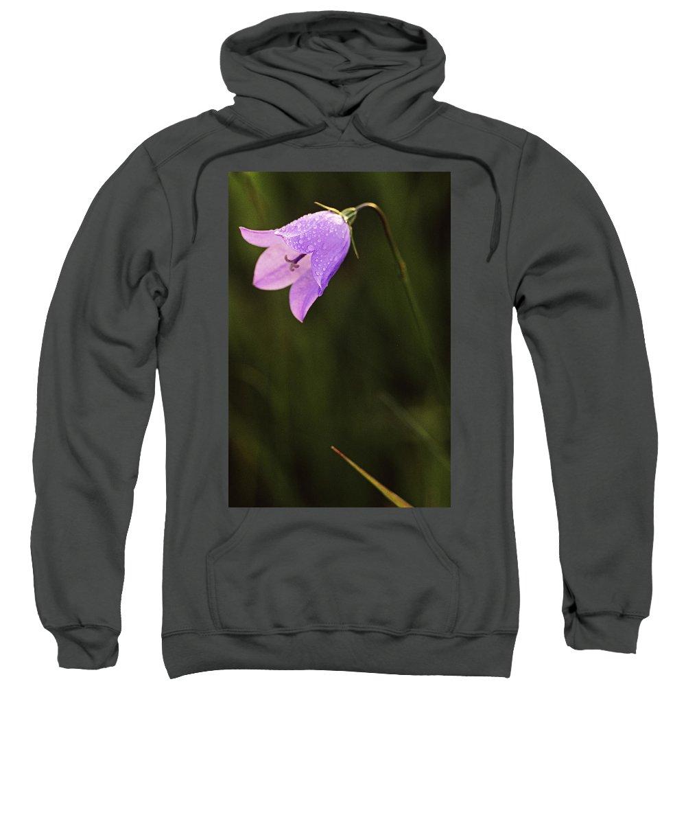 Light Sweatshirt featuring the photograph Harebell, Jasper National Park, Alberta by Darwin Wiggett