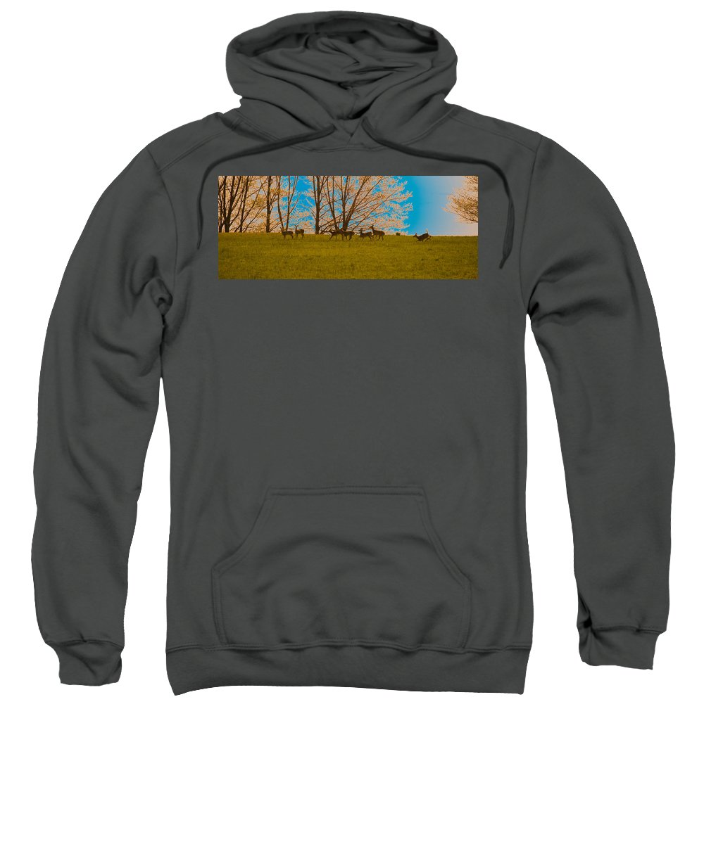 Deer Sweatshirt featuring the photograph Has Anyone Seen Rudolph by Trish Tritz