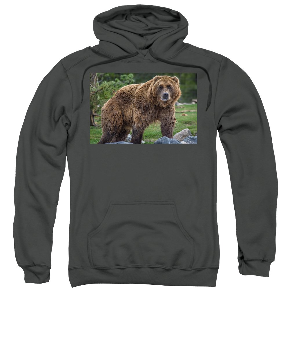 Grizzly Sweatshirt featuring the photograph Having A Bad Fur Day by Greg Nyquist
