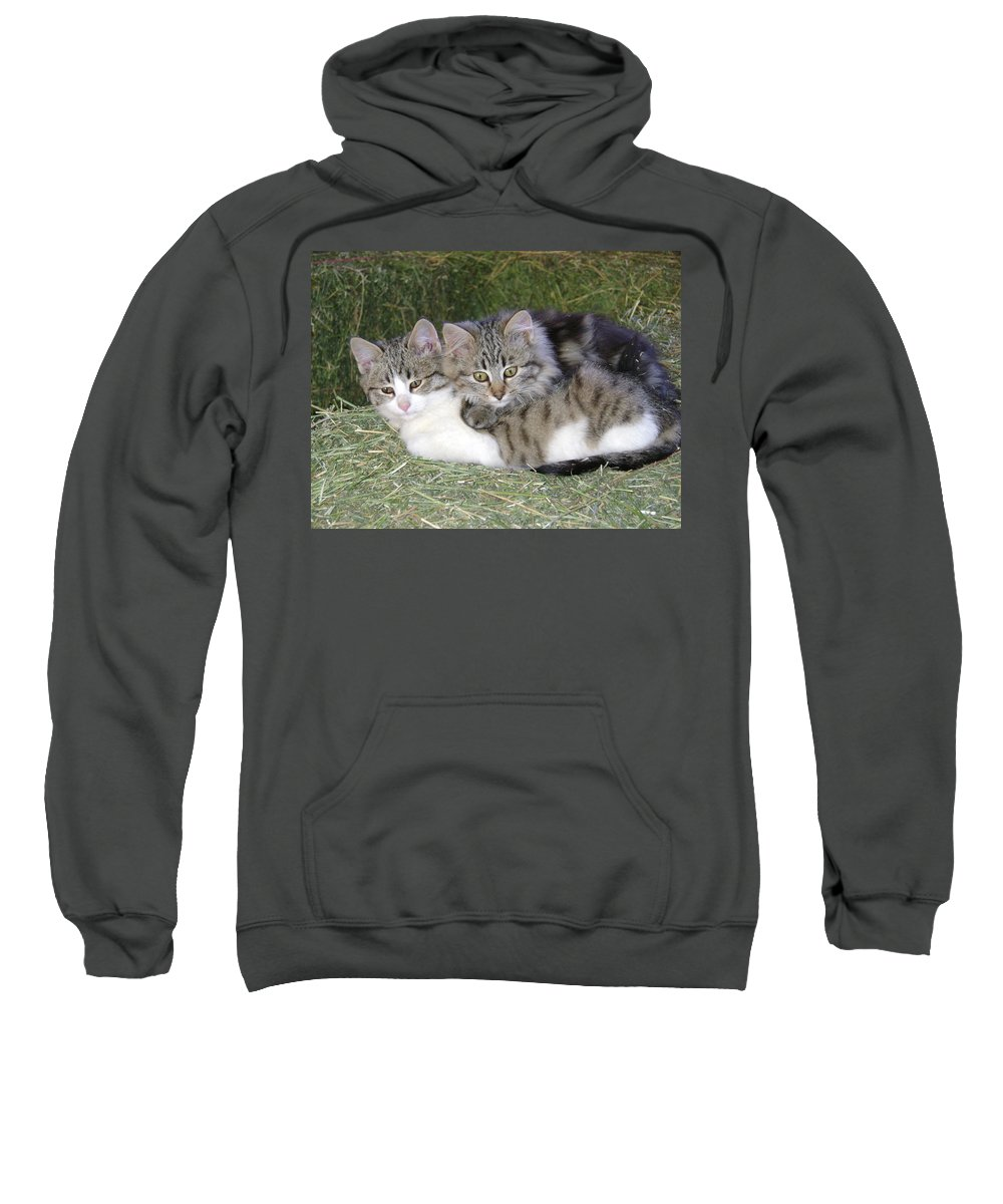 Cat Sweatshirt featuring the photograph Haystack Buddies by Charles and Melisa Morrison