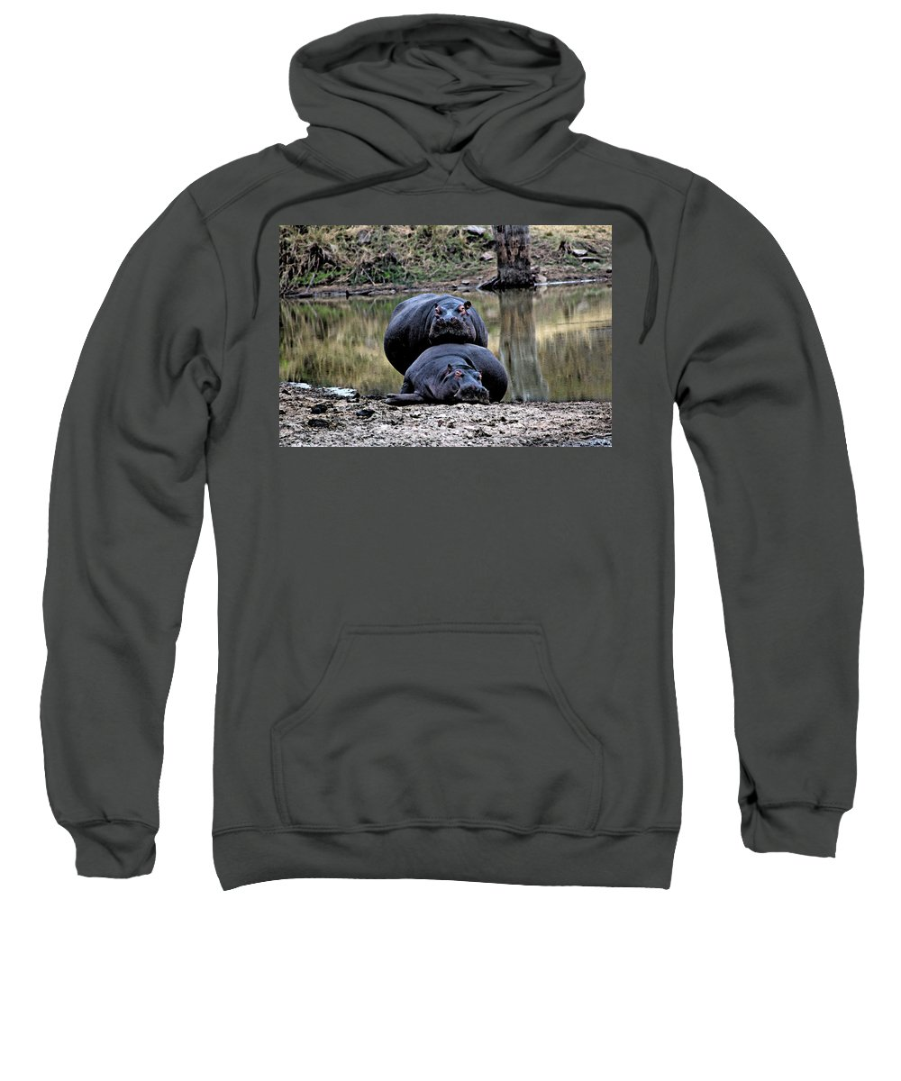 Africa Sweatshirt featuring the photograph Hippos In Love by Paul Fell