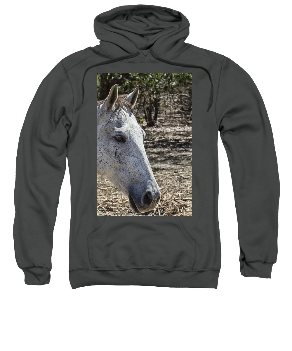Horse Sweatshirt featuring the photograph Horse With No Name V3 by Douglas Barnard