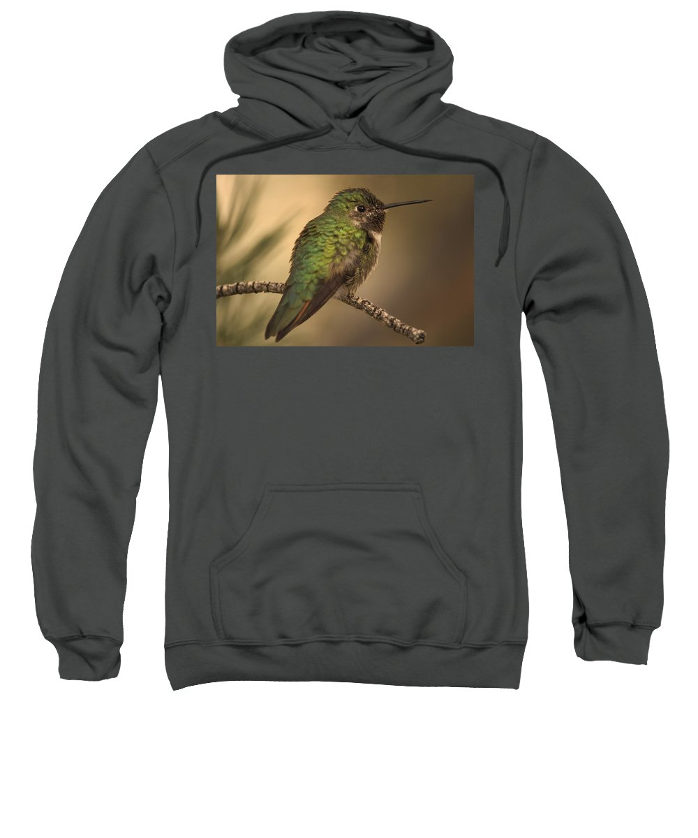 Animal Sweatshirt featuring the photograph Humming Bird On Branch by Raven Regan