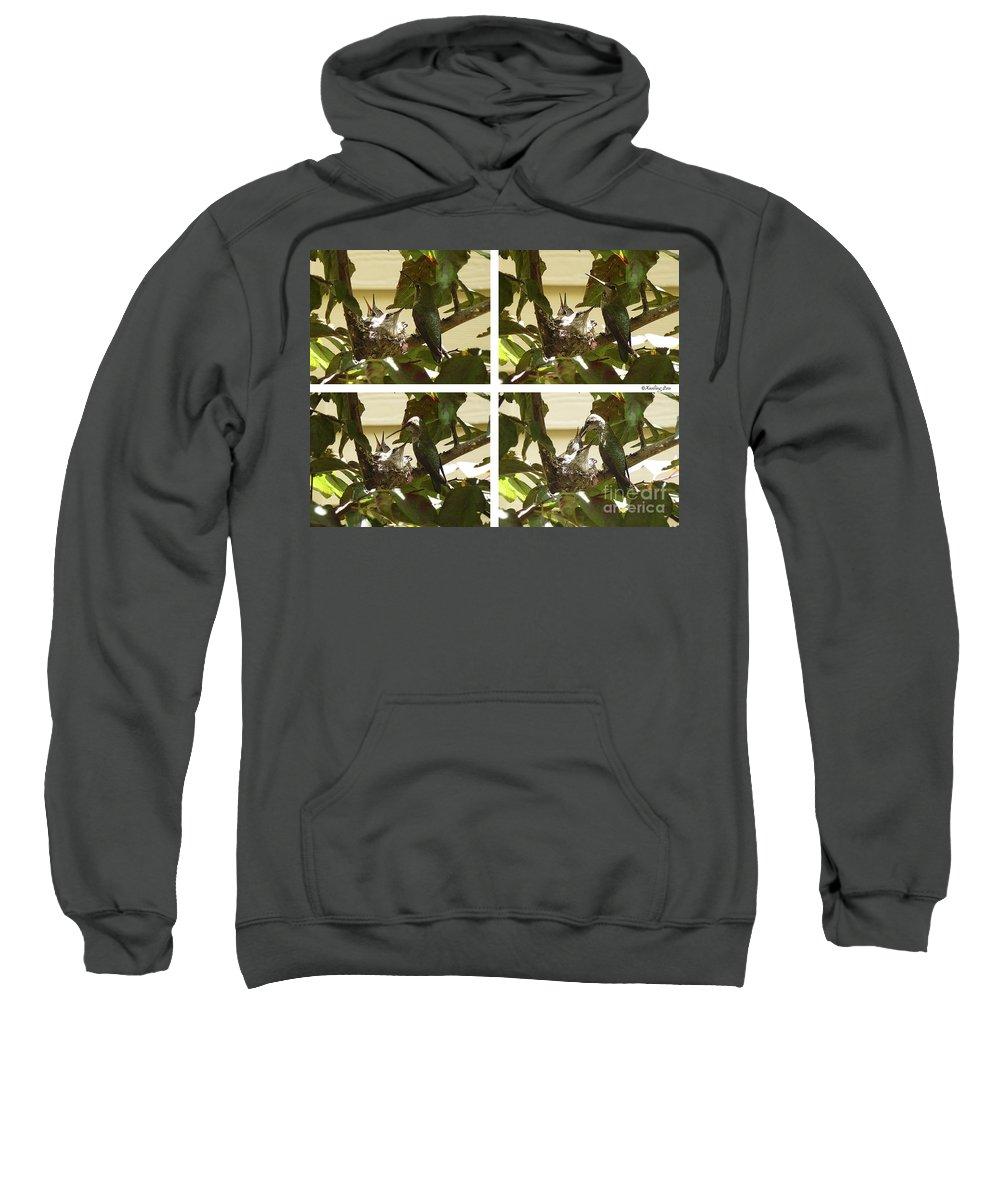 The Hummingbird Sweatshirt featuring the photograph Hummingbird Mother Feeding Her Two Babies by Xueling Zou