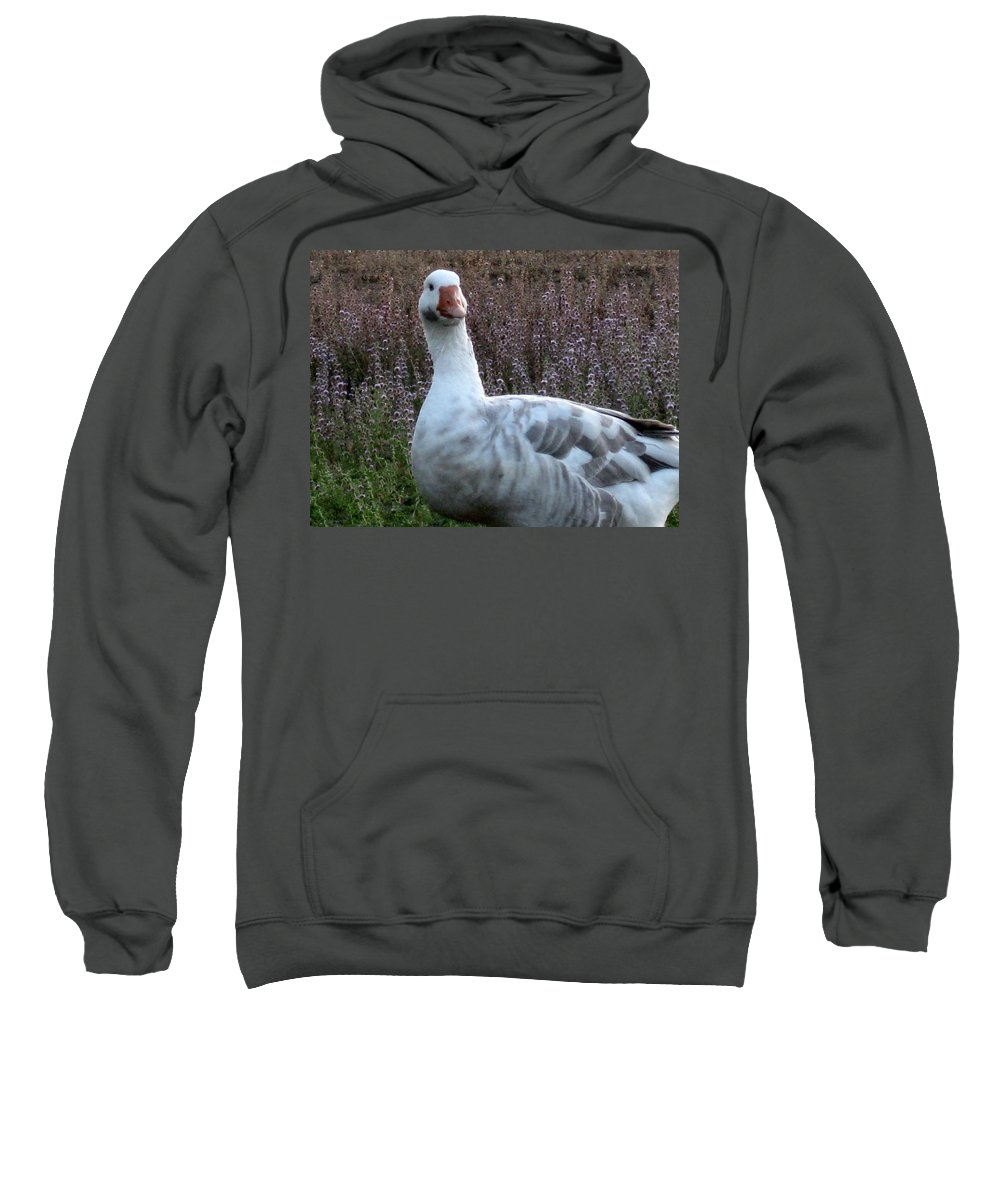 Goose Sweatshirt featuring the photograph Hybrid Goose by Linda Hutchins