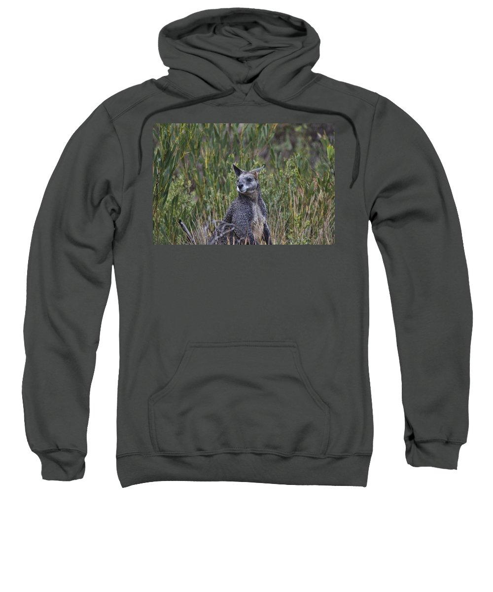 Wallaby Sweatshirt featuring the photograph I Am Listening by Douglas Barnard