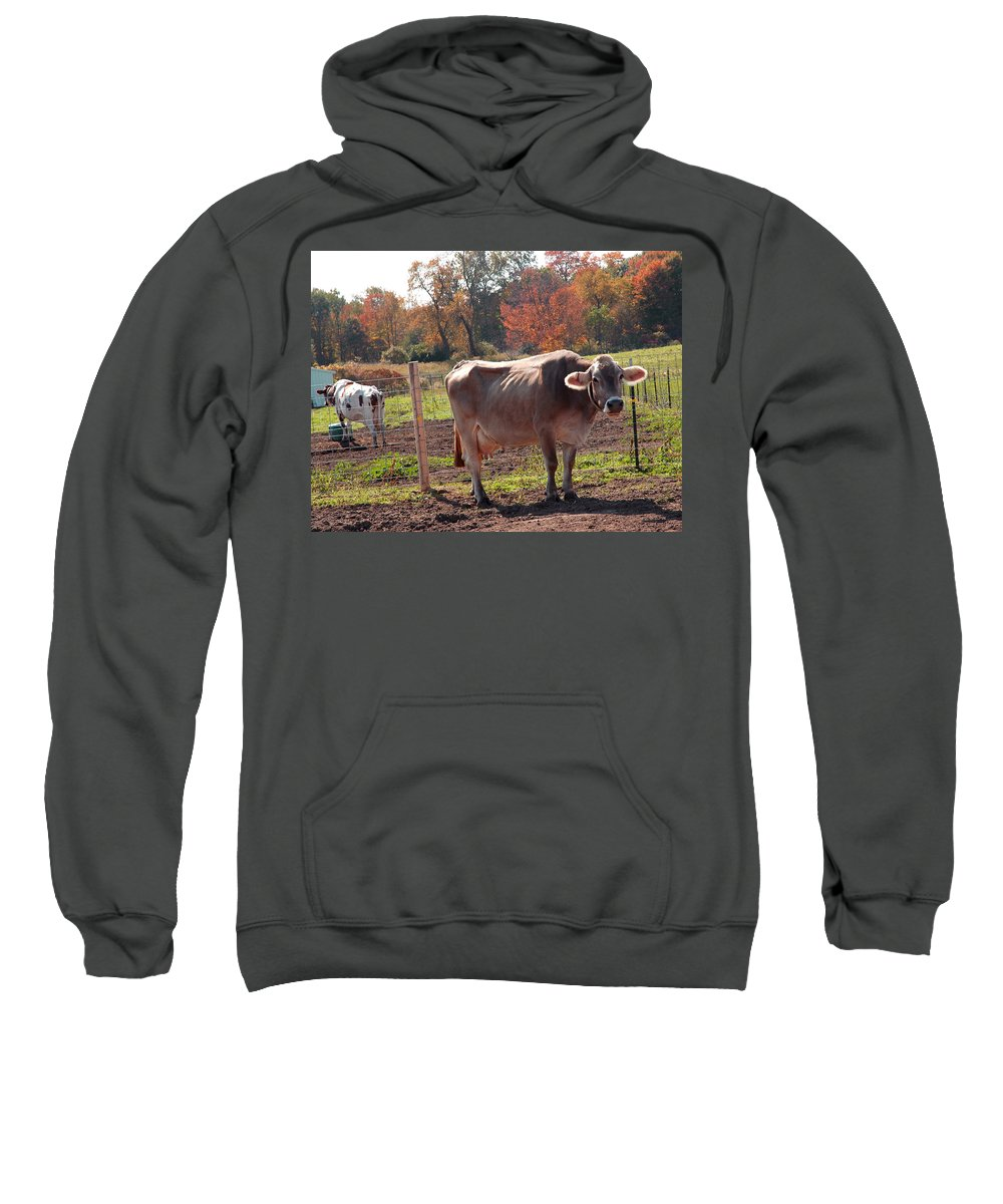 United_states Sweatshirt featuring the photograph Ignoring Cows by LeeAnn McLaneGoetz McLaneGoetzStudioLLCcom