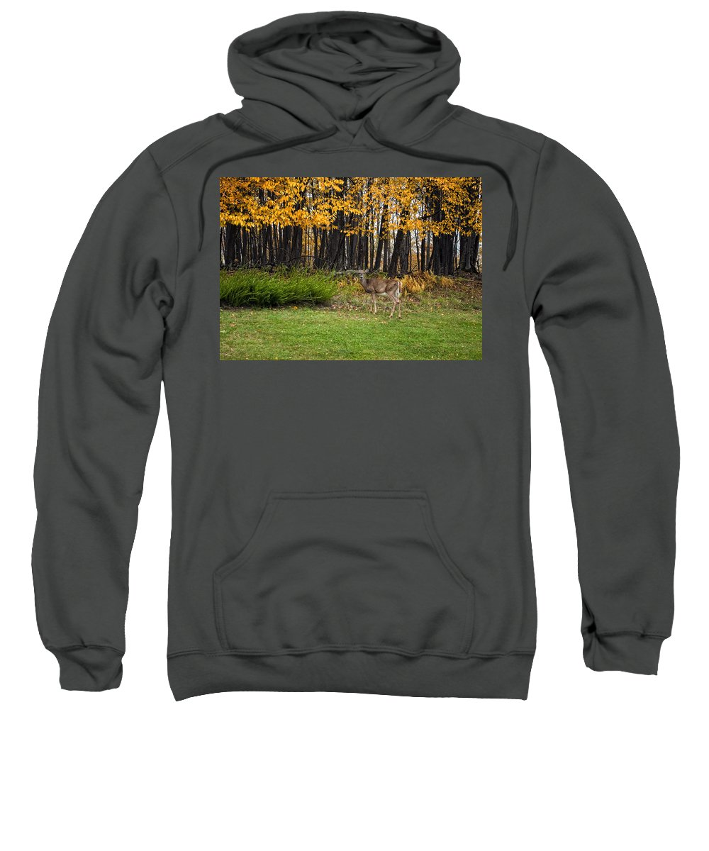 Canaan Valley Sweatshirt featuring the photograph In A Yellow Wood by Steve Harrington