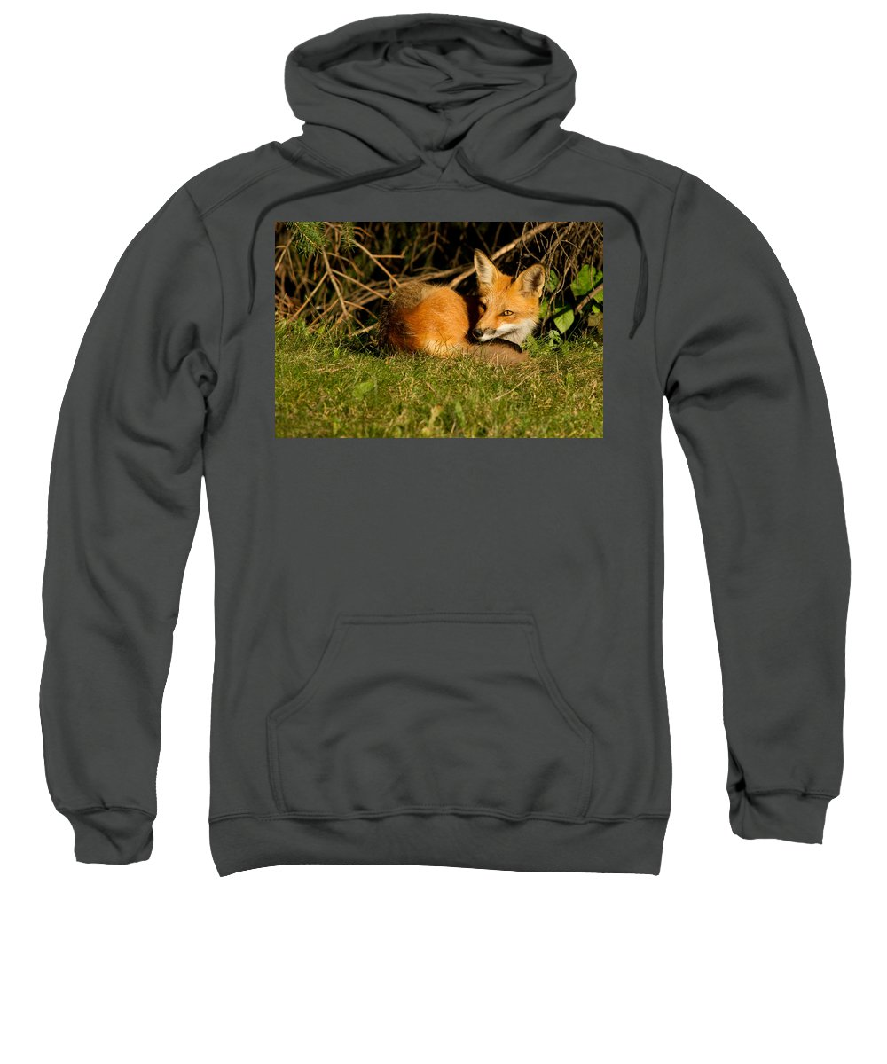 Adorable Sweatshirt featuring the photograph In The Morning Light by Mircea Costina Photography