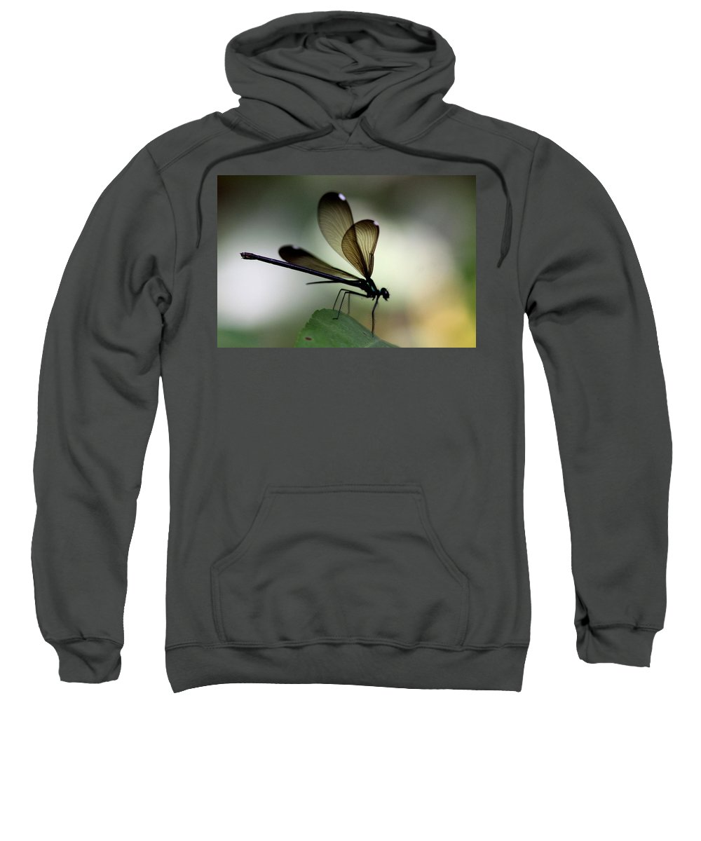 Damsel Fly Sweatshirt featuring the photograph Insect Photo - The Hunter - Ebony Jewelwing by Travis Truelove