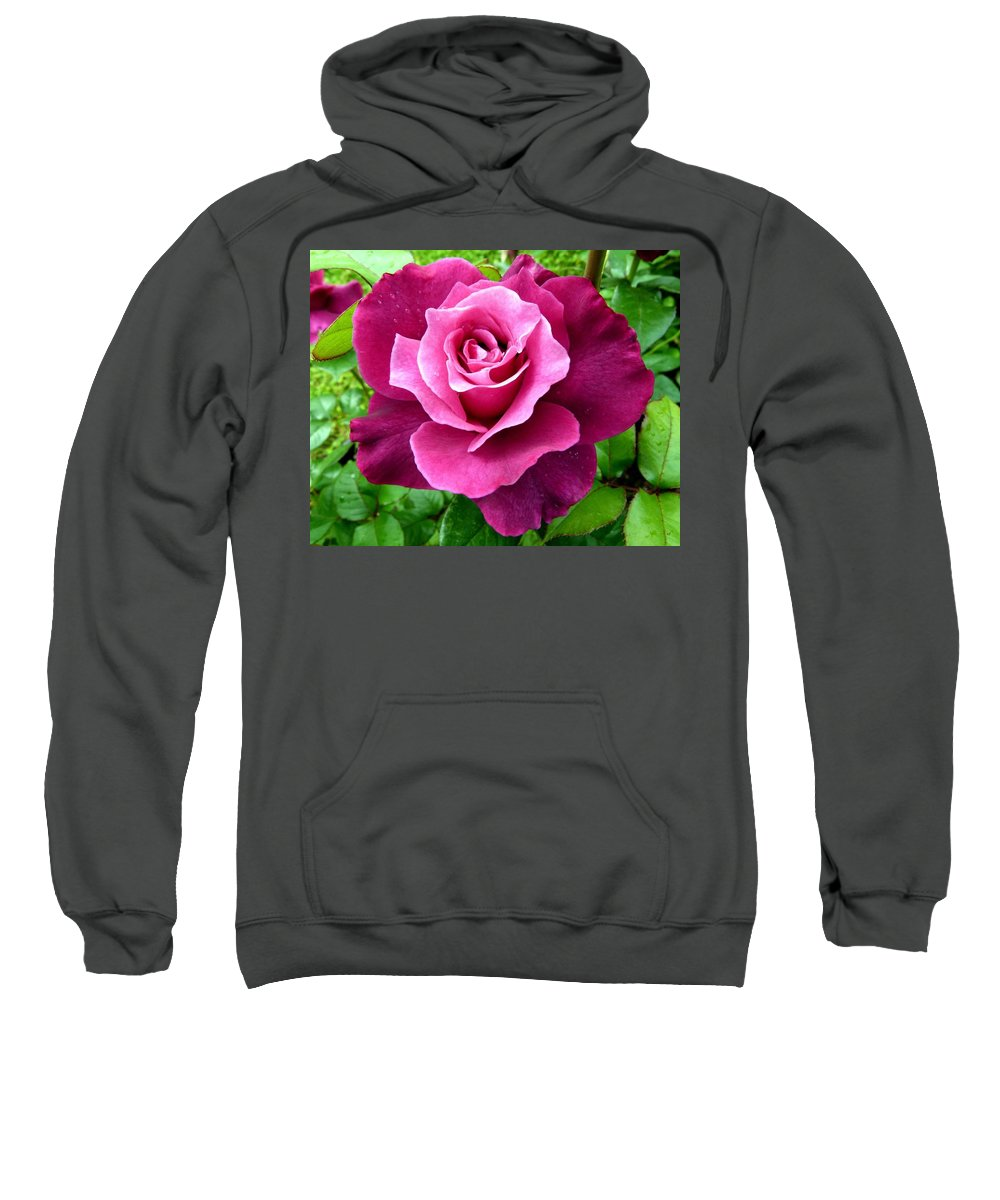 Intrigue Rose Sweatshirt featuring the photograph Intrigue Rose by Will Borden
