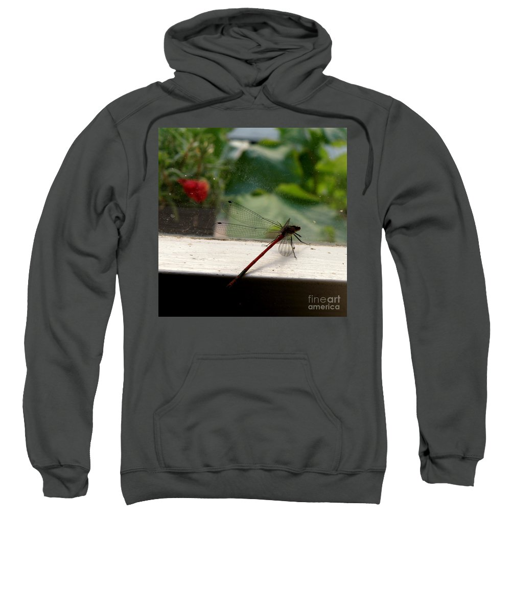 Dragonfly Sweatshirt featuring the photograph It's Always Greener by Lainie Wrightson