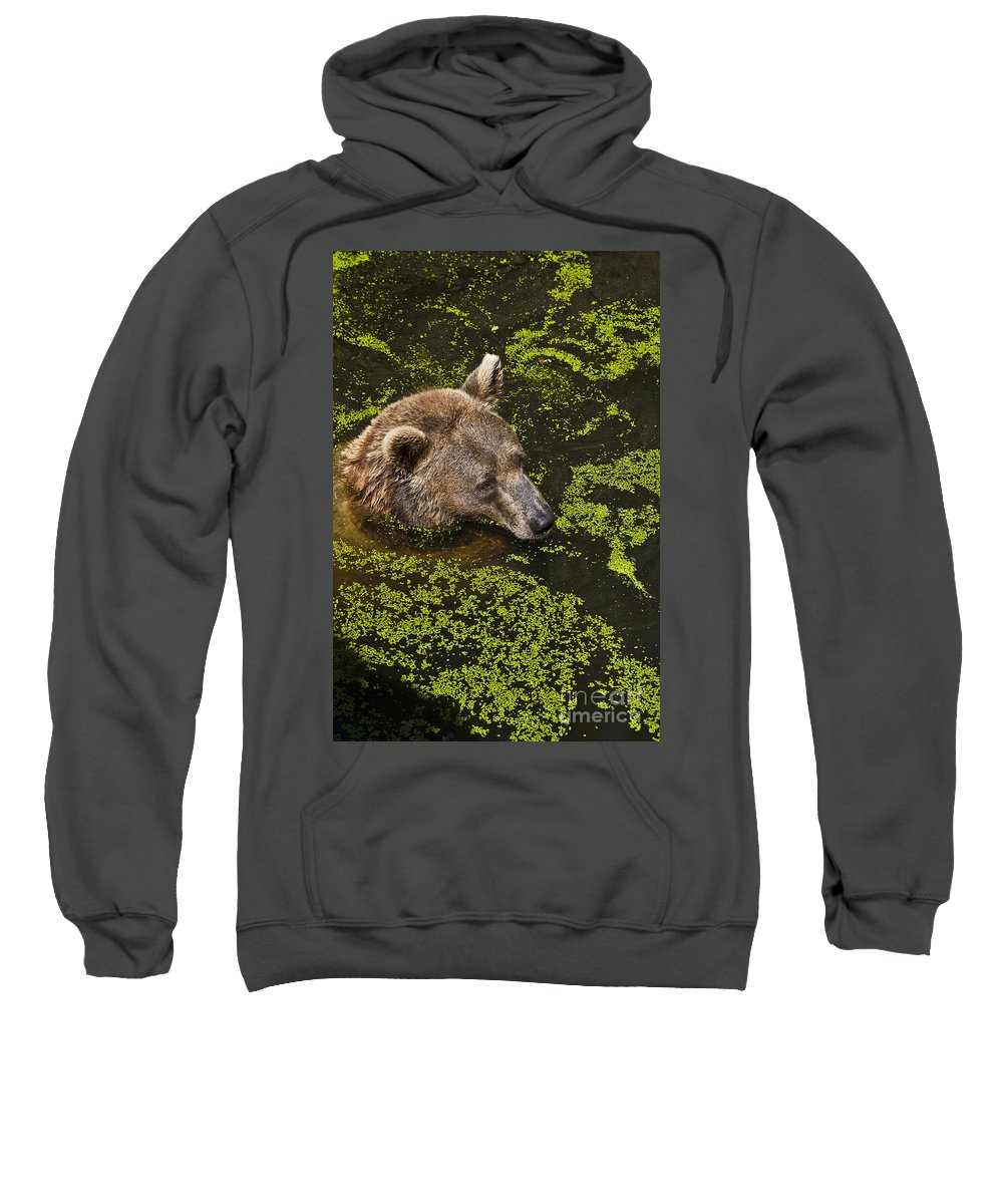 Nature Sweatshirt featuring the photograph It's Cool In Here by Heiko Koehrer-Wagner